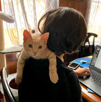 Kitten looks over shoulder of woman at camera while she works